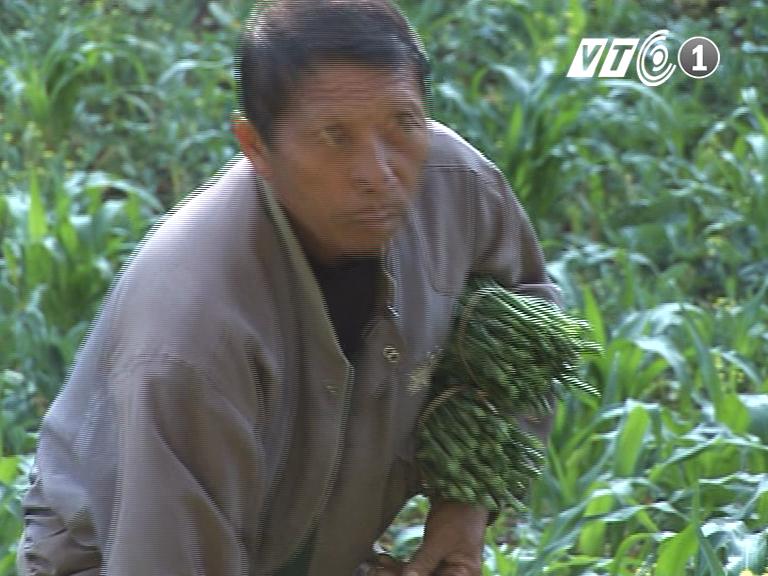 Già Xay Khu Zang và câu chuyện về cây rau Lóng Lăn