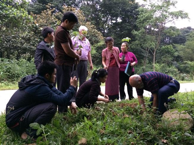 Planting Trees in Hepa