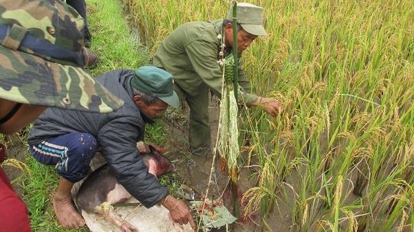 Tri thức bản địa trong canh tác lúa nước của người Ca Dong
